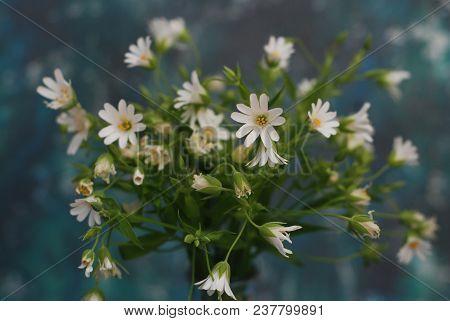 Daisy Camomile Fowers Rustic Blue Background. Flower Bouquet Arrangement Composition Close Up