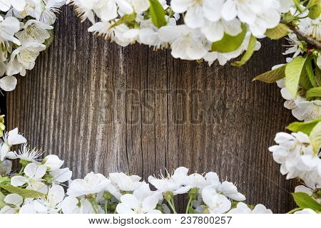 White Fruit Tree Flowers On Wooden Background .