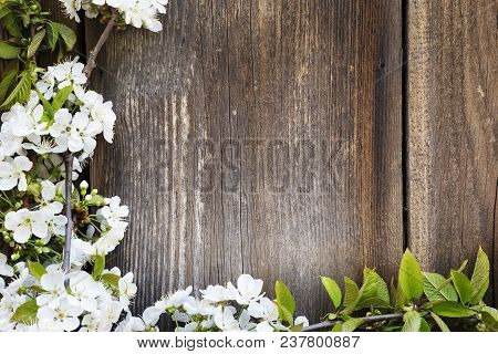 White Fruit Tree Flowers On Wooden Background.