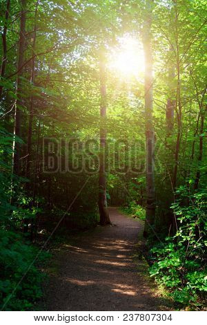 The sun shining through the trees in the Haunted Woods in PEI National Park, Prince Edward Island, Canada.