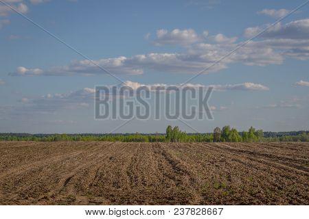Field Plowed, Sown Cereals. Plowed Field In Spring Day. Black Soil Plowed Field. Plowed Field In The