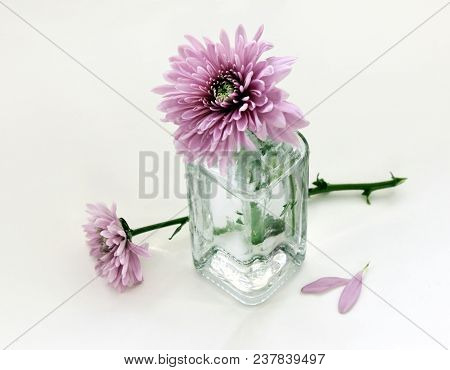 Still Life With Beautiful Chrysanthemum Flowers In The Small Vintage Glass Botlle Against A High Key