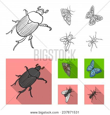 Arthropods Insect Beetle, Moth, Butterfly, Fly. Insects Set Collection Icons In Outline, Flat Style