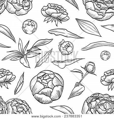 Vector Peony Seamless Pattern Of Flowers And Leaves Isolated On White Background