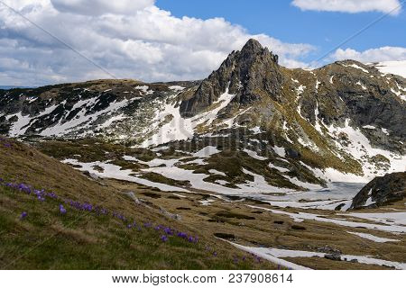 Springtime Scenery Of Frozen Lake, Rugged Mountain Peaks In Background And Purple Crocuses In Foregr