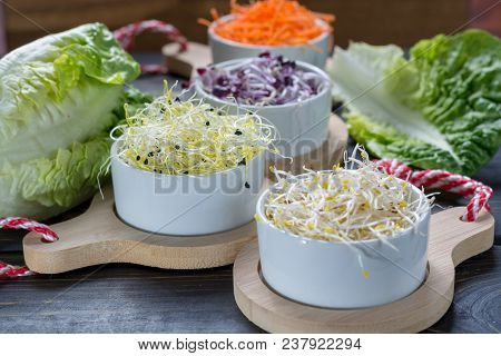 Ingredients For Healthy Salad. Raw Fresh Young Organic Sprouts Of Leek, Alfalfa, Red Reddish And Car