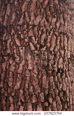 Texture Of Tree Or Background, Stock Photo