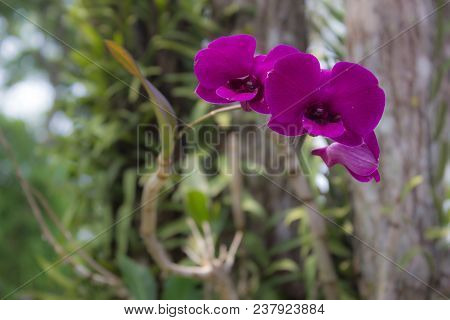 Violet Flowers In The Garden, Stock Photo