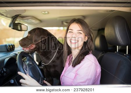 Portrait Of A Young Cheerful Woman Sitting In Car Driving For A Trip With Chocolate Labrador Looking