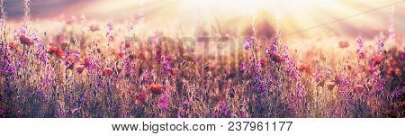 Flowering Poppy Flower - Beautiful Poppy Flower And Purple Flower In Meadow (beautiful Landscape)