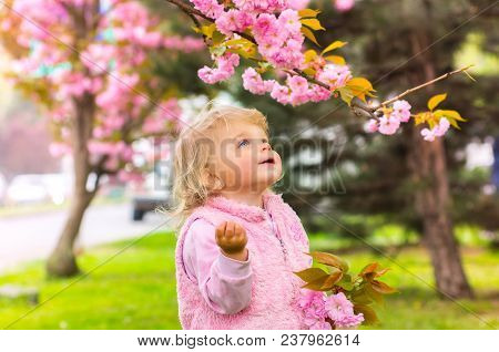 Little Charming Blonde Girl With Blue Eyes Looking At A Cherry Blossom Branch