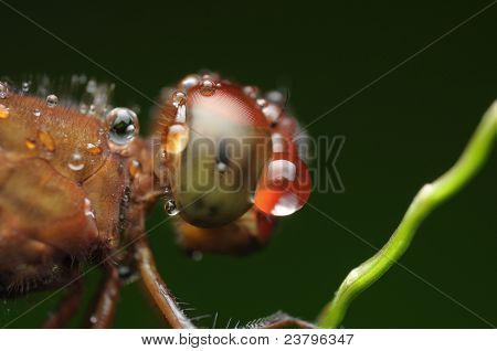 dragonfly and waterdrop