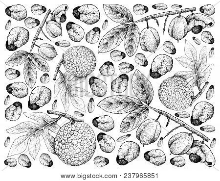 Tropical Fruits, Illustration Wall-paper Background Of Hand Drawn Sketch Of Ackee Or Blighia Sapida
