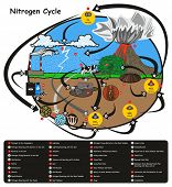Nitrogen Cycle infographic diagram showing how nitrogen go in circulation with human environment factors nitrification fixation ammonification plant animal fossil fuel rain lightning volcano education poster