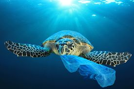 Plastic pollution in ocean environmental problem. Turtles can eat plastic bags mistaking them for jellyfish