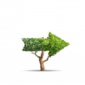 Illustration. Tree Grows Up In Arrow Shape Over White Background. Concept Business Image
