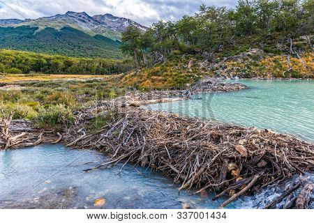 Turquoise river with a beaver dam on a way to Laguna Esmeralda. Tierra del Fuego, Argentina