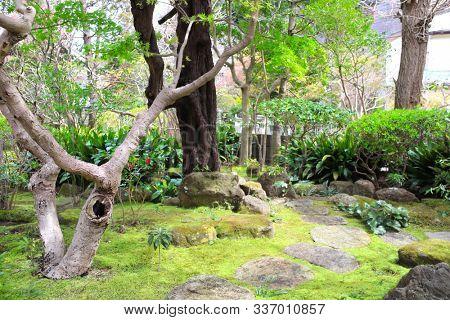 Decorative garden with trees, stones and moss in Hokokuji temple, Kamakura, Japan