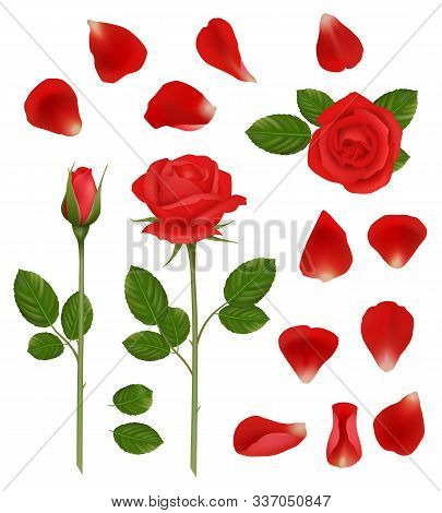 Red Roses. Beautiful Romantic Flowers Buds And Petals Leaves Nature Wedding Plants Vector Realistic