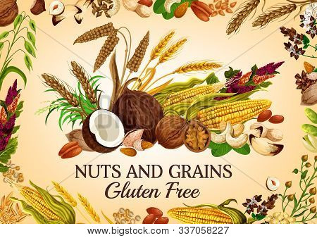 Nuts And Cereal Grains, Natural Organic Gluten Free Food Nutrition. Vector Healthy Vegan Raw Superfo