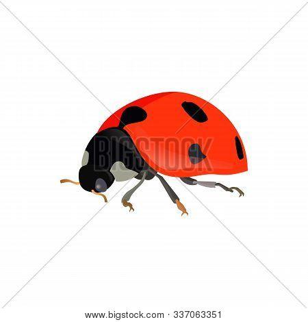 Red Ladybugs. Vector Ladybird Isolated On White Background Eps10