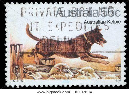 AUSTRALIA - CIRCA 1980: A stamp printed in Australia shows Australian Kelpie Dog, circa 1980