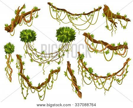 Liana Or Jungle Plant Or Vine Wild Greenery Winding Branches Vector Stem With Leaves Isolated Decora