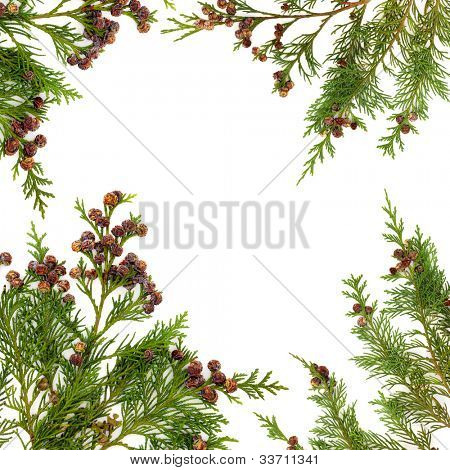 Border of cedar cypress  leaf sprigs with pine cones over white background.