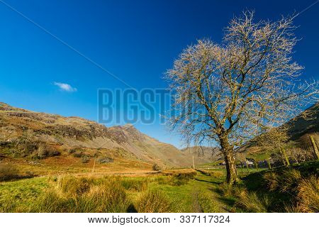Winter Tree In Sunny Valley With Copyspace.