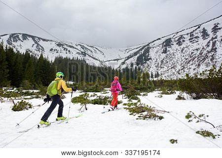Couple Of Touring Skiers Backpackers Walking On Skis Between Fir Trees To Snowy Mountain. Back View.