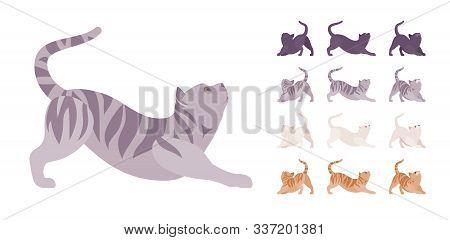 White, Black, Orange, Grey Striped Pedigree Cat Stretching Set. Active Healthy Kitten With Beautiful