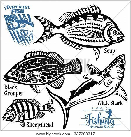 Scup, Black Grouper, White Shark And Sheepshead - Fishing On Usa Isolated On White