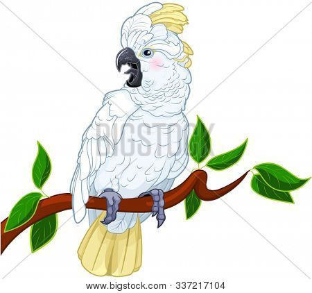 Illustration of cute talking cockatoot
