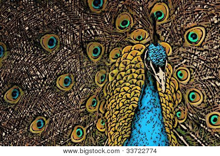 Peacock Splendor Illustration
