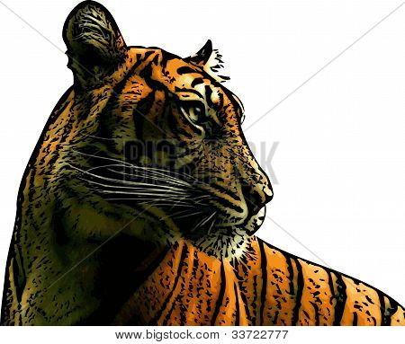 Tiger Profile Illustration