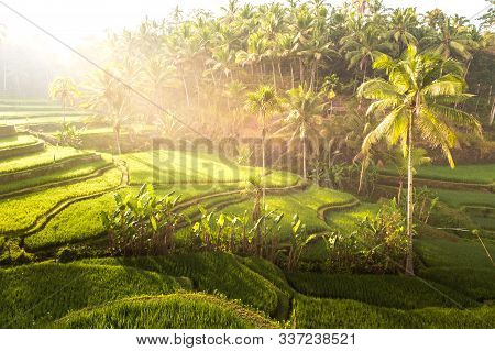Touristic Iconic Rice Field In Bali, Indonesia. Beautiful Sunlight During The Sunrise On Tegallalang