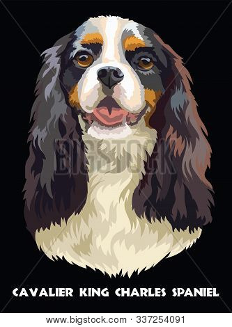 Realistic Portrait Of Dog Cavalier King Charles Spaniel. Colorful Vector Drawing Illustration Isolat