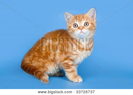A Portrait of Little Kitty On Blue Background poster