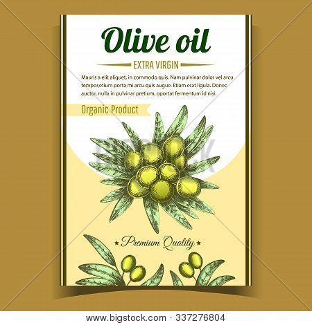 Olive Extra Virgin Organic Product Poster Vector. Agricultural Vegetable And Green Leaves On Center