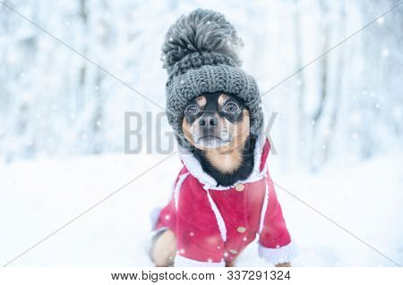 Dog In A Funny Knitted Hat With A Huge Pumpon In The Winter Forest, A Space For Text, Concept  Warm