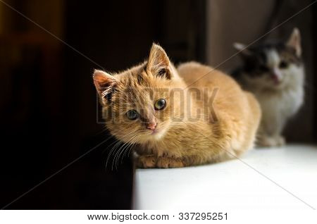Red Fluffy Kitten Sits And Basks On The Windowsill Of The House That Sheltered Him