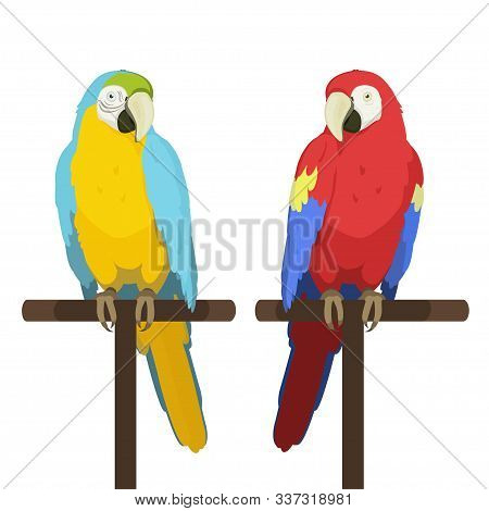 Ara Parrot. Macaw. Vector Cartoon Illustration Of Red Macaw And Blue And Yellow Macaw Sitting On A P