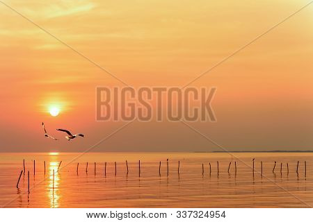Pair Of Seagulls In Yellow, Orange Sky And Bright Sun At Sunrise, Happy Animal In Beautiful Nature L