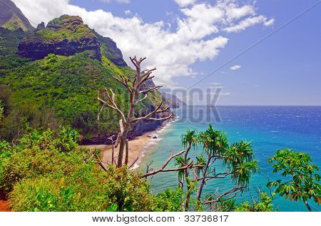Tropical Coast In Hawaii