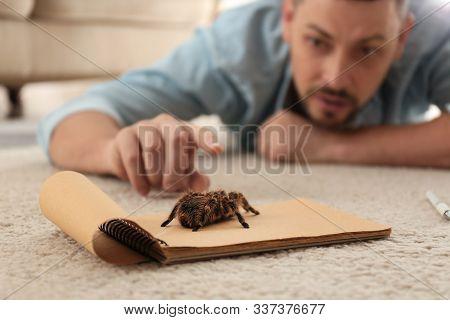 Man And Tarantula On Carpet. Arachnophobia (fear Of Spiders)