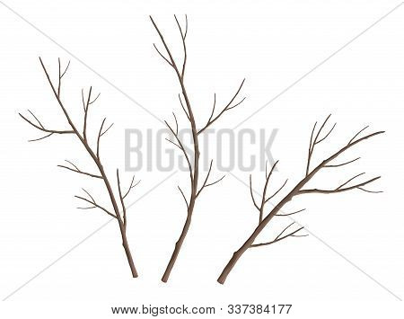 Set Of Tree Branches. Bare Tree Branches. Set Of Vector Nature Elements On White Background