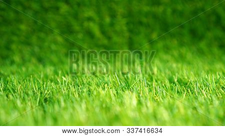 Artificial Grass In A Garden. Artificial Turf Background.