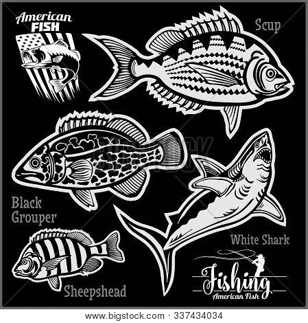 Scup, Black Grouper, White Shark And Sheepshead - Fishing On Usa Isolated On Black