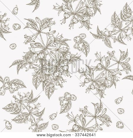 Honeysuckle Flowers And Berries Seamless Pattern. Lonicera Japonica. Vector Illustration. Design For