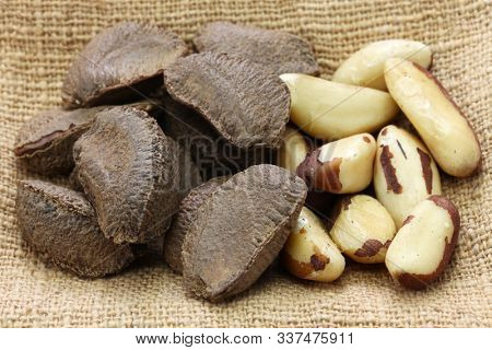 brazil nut, in shell ,and shell removal
